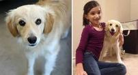 Chica con su perro nuevo
