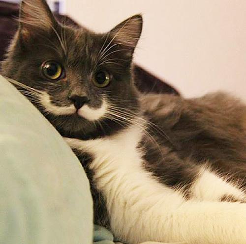 hamilton_hipster_cat