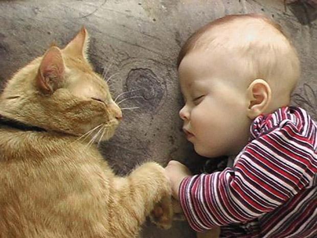 Gatos-Niños