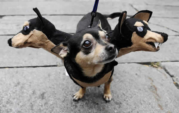 mascotas-disfrazadas